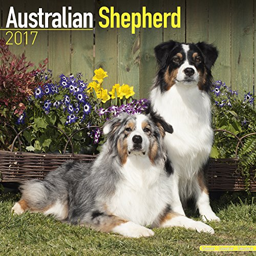 Australian Shepherd Calendar 2017 - Dog Breed Calendars - 2016 - 2017 wall calendars - 16 Month by Avonside (Shepherd Calendar)