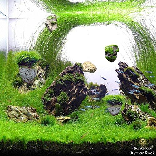 Avatar Pandora Landscape: Magical Hallelujah Floating Garden By SunGrow