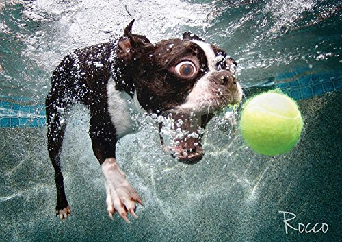 Cheatwell Games 28200 Rocco Underwater Dogs Jigsaw