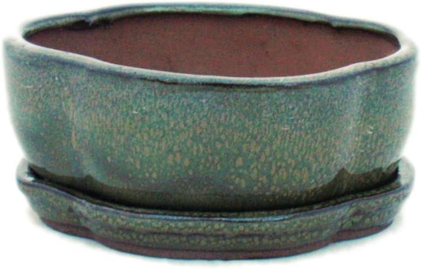 Bonsai-Coque avec sous assiette Taille 1-Vert-Haitang//OVALE-modèle i5