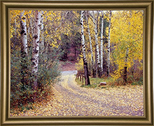 Birch Tree DriveFence & Road, Santa Fe, New Mexico 06 Framed Print 28.80
