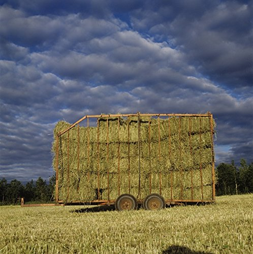 A cart full of hay bails 30x40 photo (Bail Hay)