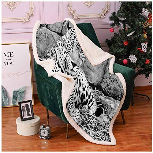 House Decor Thick Blanket Jaguar Wild Big Cats Theme Feline with Dots on Body Fur Print Jungle Tiger Leopard Fleece Throw Gray 50