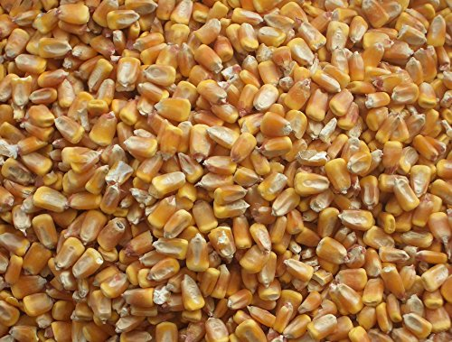 Bulk Whole Corn For Wildlife Feeding (1, 10 Pounds) (Wildlife Feed)