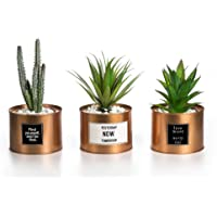 """Opps Mini Artificial Plants Plastic Green Grass Cactus with Special Golden Can Pot Design for Home Décor €"""" Set of 3"""