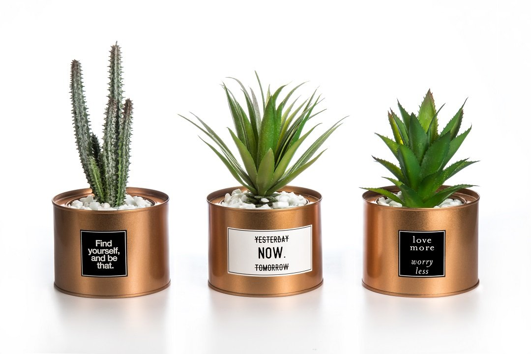 Opps Mini Artificial Plants Plastic Green Grass Cactus with Special Golden Can Pot Design for Home Décor - Set of 3 by Opps