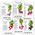 Multicolor Radish Seed Packet Assortment (6 Individual Packets) Non-GMO Seeds by Seed Needs