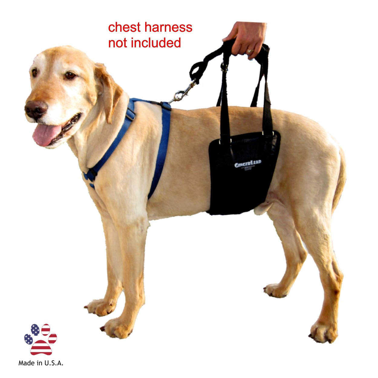 GingerLead Dog Support & Rehabilitation Harness Medium/Large Dog Sling with Stay on Straps; Helps Older, Disabled or Injured Dogs Walk. Fits Medium Male and Female Dogs and Large Male Dogs by GingerLead