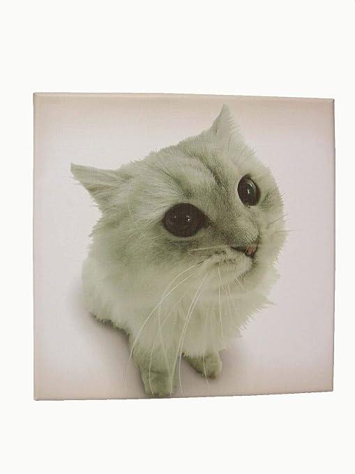 Desconocido Cuadro Plotter Canvas Madera PEQUEÑO Gato: Amazon.es: Hogar