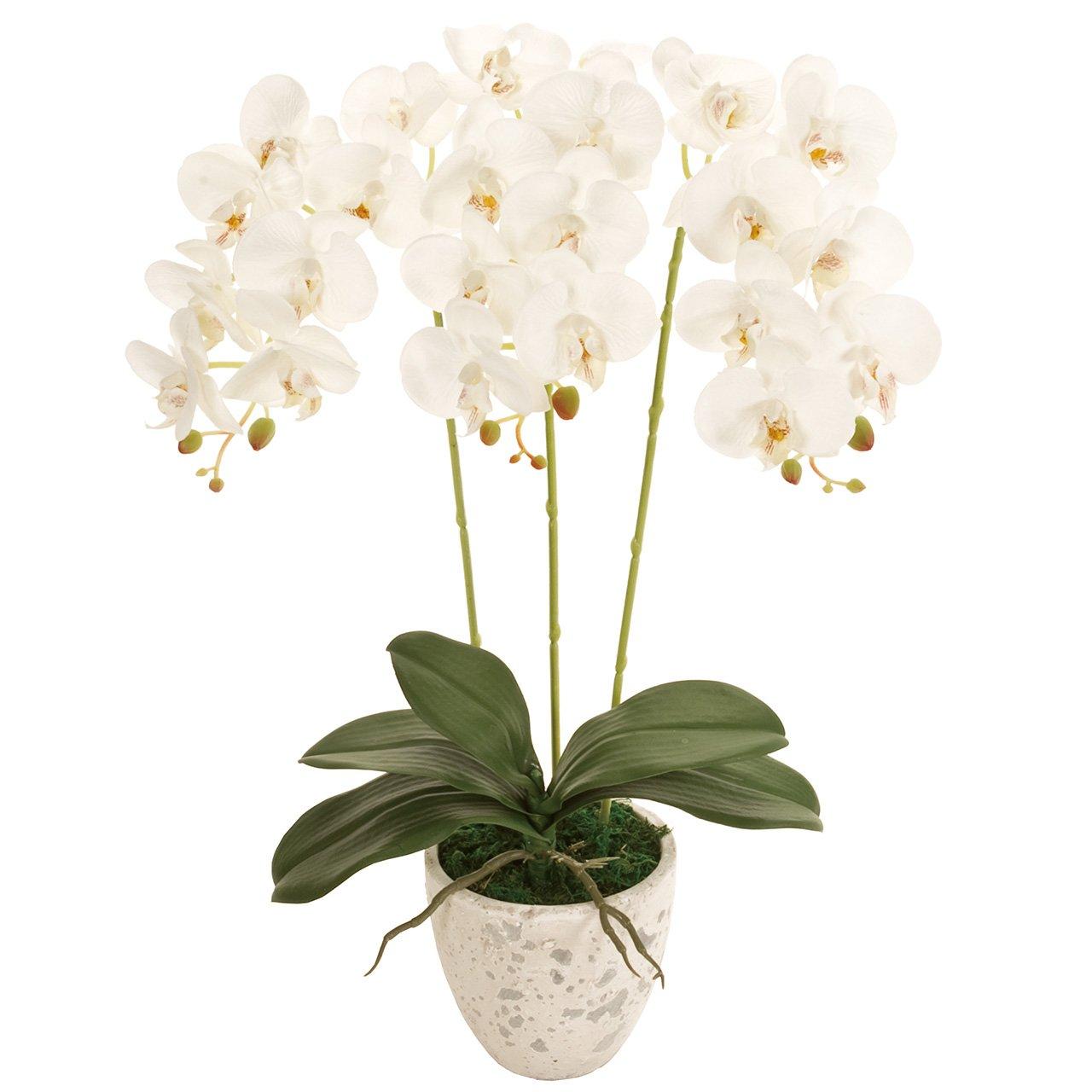 MAGIQ 東京堂 上質な造花 ピュアオーキッド3本立て 光触媒 #ホワイト ZV008080-001 B07B4HSTJC ホワイト ホワイト