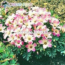 Rare Oxalis Candy Cane Sorrel Seeds 50pcs World's RarePink Carpet Oxalis Flowers For Garden Home Planting Flowers easy to grow