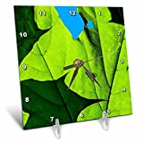 3dRose Alexis Photography - Spring - Maple leaf, fly insect, blue sky. Window of opportunity - 6x6 Desk Clock (dc_265571_1)