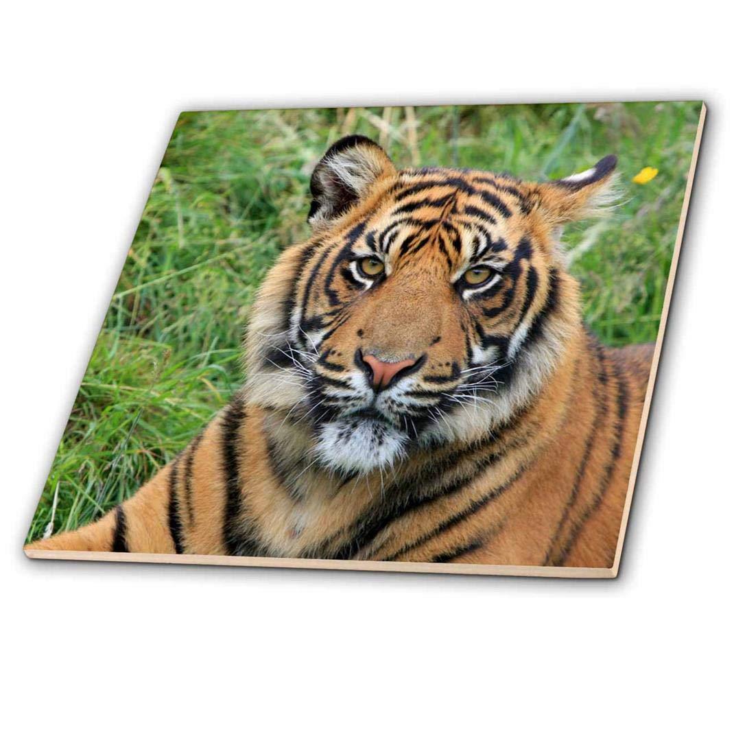 12 x 12 Rikki Knight Tiger on Dark Green Background Design Ceramic Art Tile