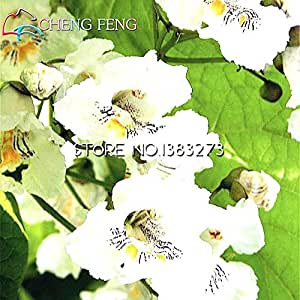 100pcsCatawba-tree Catalpa Seeds Family Garden Northern Perennial Plant Tree Seeds Hardy Flowering Plants