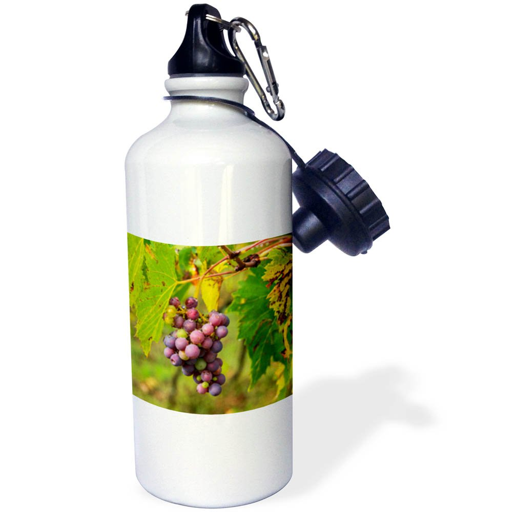 3dRose Danita Delimont - Vineyards - Italy, Tuscany, Chianti, Autumn, Harvest Grapes waiting to be picked - 21 oz Sports Water Bottle (wb_277685_1)