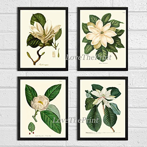 Magnolia Flower Print Set of 4 Prints Antique Beautiful White Flowers Blooming  Spring