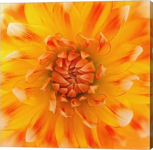 Orange Glow by Flowerphotos Orange Canvas Art Wall Art