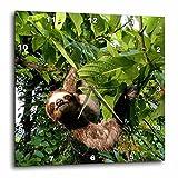 3dRose dpp_86913_1 Panama, Panama City, Three-Toed Sloth Wildlife-Sa15 Czi0561-Christian Ziegler-Wall Clock, 10 by 10-Inch