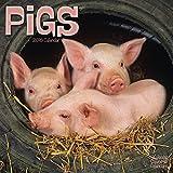 Pigs Calendar - 2016 Wall calendars - Animal Calendar - Monthly Wall Calendar by Avonside