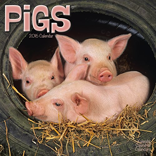 [B.e.s.t] Pigs Calendar - 2016 Wall calendars - Animal Calendar - Monthly Wall Calendar by Avonside DOC