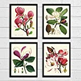 Magnolia Botanical Print Set of 4 Antique Beautiful Pink Violet White Blooming Flowers Garden Tree Plant Nature Home Room Decor Wall Art Unframed