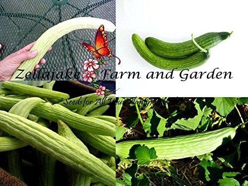 Armenian Cucumber Light & Dark Mix 1/2 oz Seeds Rare Long