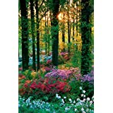 1art1 43305 Poster Forests Flowers of the Forest 91 x 61 cm by 1art1Ã'Â