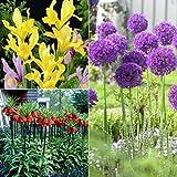 Van Zyverden 87235 Deer, Rodent and Squirrel Resistant Garden - Set of 25 Flower Bulbs, 8/24 cm, Yellow, Purple and Orange