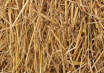 amazon com 100 percent natural wheat straw 8 lbs garden outdoor