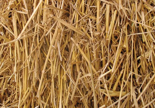 Thunder Acres- 4 Pounds 100% Natural Wheat Straw