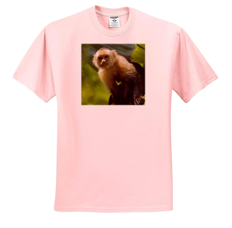 3dRose Danita Delimont Costa Rica Adult T-Shirt XL Monkey ts/_314405 Spider Monkey Monkeys Tree