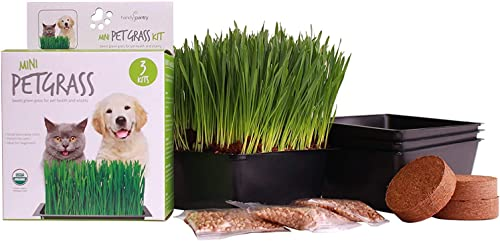 Handy Pantry Organic Cat Grass Kit – Includes 3 Trays, 3 Soil Pucks, and 3 Packs Non GMO Wheatgrass Seed – A Healthy Treat for Cats, Dogs, Rabbits, and More