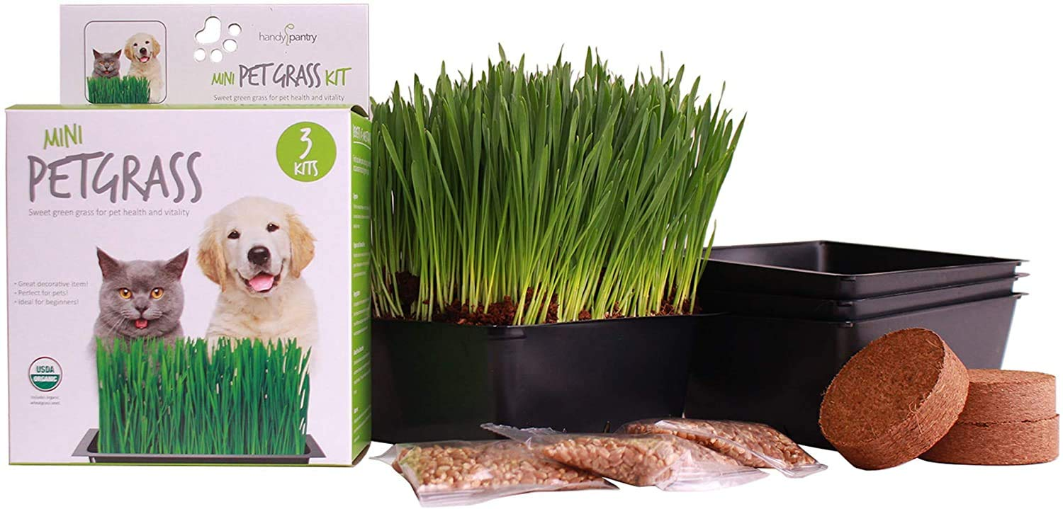3 Kits : Mini Organic Pet Grass Kit - Grow Wheatgrass for Pets ...