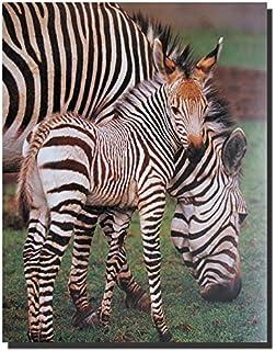 Zebra Wall Decor Wildlife Animal Art Print Poster (16x20)