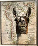 South America Llama Map by Take Me Away Canvas Art Wall Picture, Museum Wrapped with Black Sides, 16 x 20 inches