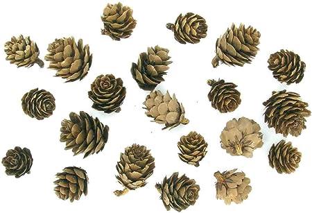 Déco nature mini pommes de pin environ 30 pièces