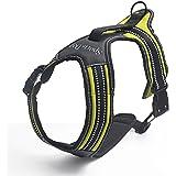 Pettorina Per Cane- Premium Imbracatura Durevole e Regolabile ,Super-comoda per la Corsa, Passeggiate, Jogging con cane grande o piccolo-Taglia L,Verde