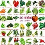 Garden Vegetable Green Organic Chinese Seeds 40