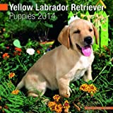 Yellow Labrador Retriever Puppies 2014 Wall Calendar