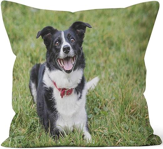 Border Collie Cushion Dog Shaped Sheepdog Gift//Present