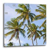 3dRose Coconut Palm Trees - Na01 Dpb0008 - Douglas Peebles - Wall Clock, 10 by 10-Inch (dpp_83382_1)