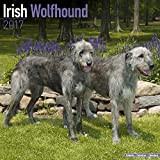 Irish Wolfhound Calendar 2017 - Dog Breed Calendars - 2016 - 2017 wall calendars - 16 Month by Avonside