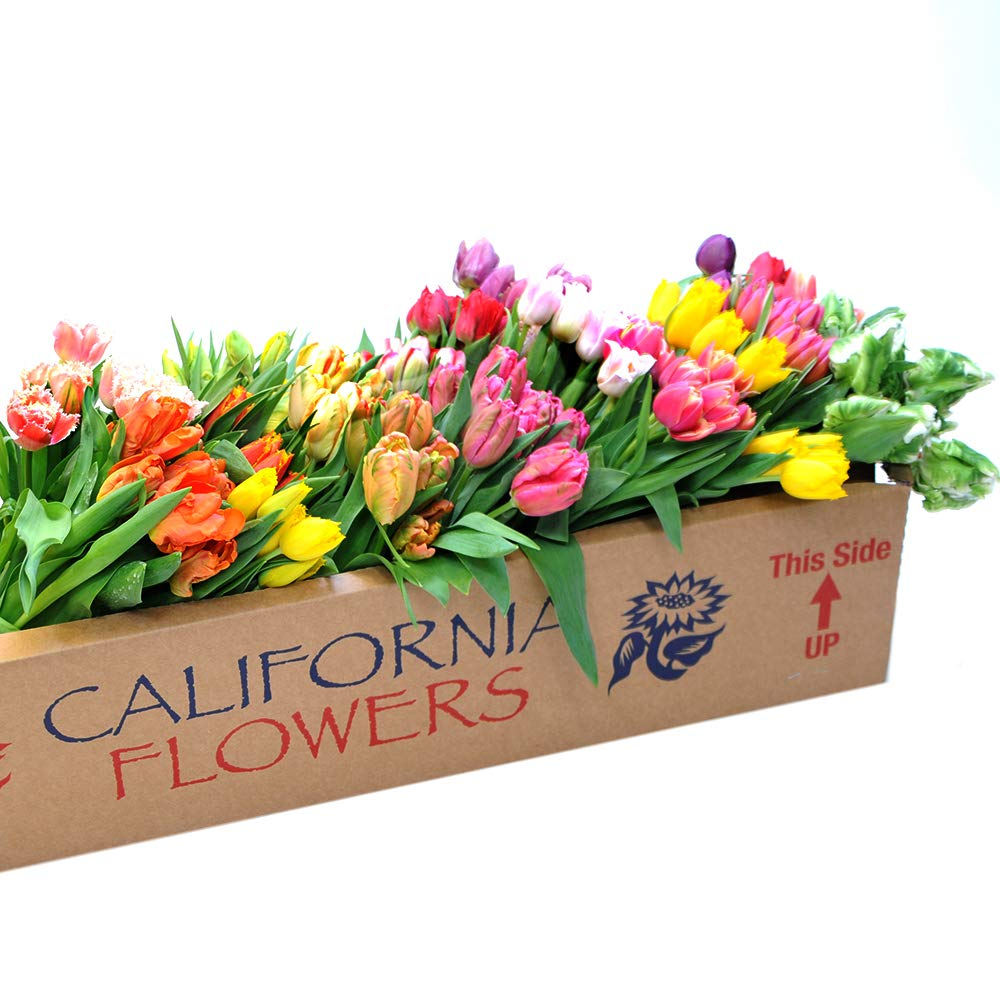 Stargazer Barn 200 Stems of Assorted Fancy Tulips - DIY Wholesale Flowers - Farm Direct