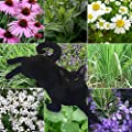 9 Lives Cat Plant Seed Collection - 9 Variety Seed Pack of Plants for Cats - Cat Grass, Catmint, Catnip, Echinacea, German Chamomile, Lemongrass, Rosemary, Spearmint, Valerian - FROZEN SEED CAPSULES