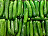 30+ ORGANICALLY GROWN Persian Beit Alpha (A.k.a. Lebanese) Cucumber Seeds Heirloom NON-GMO Crispy Fragrant From USA