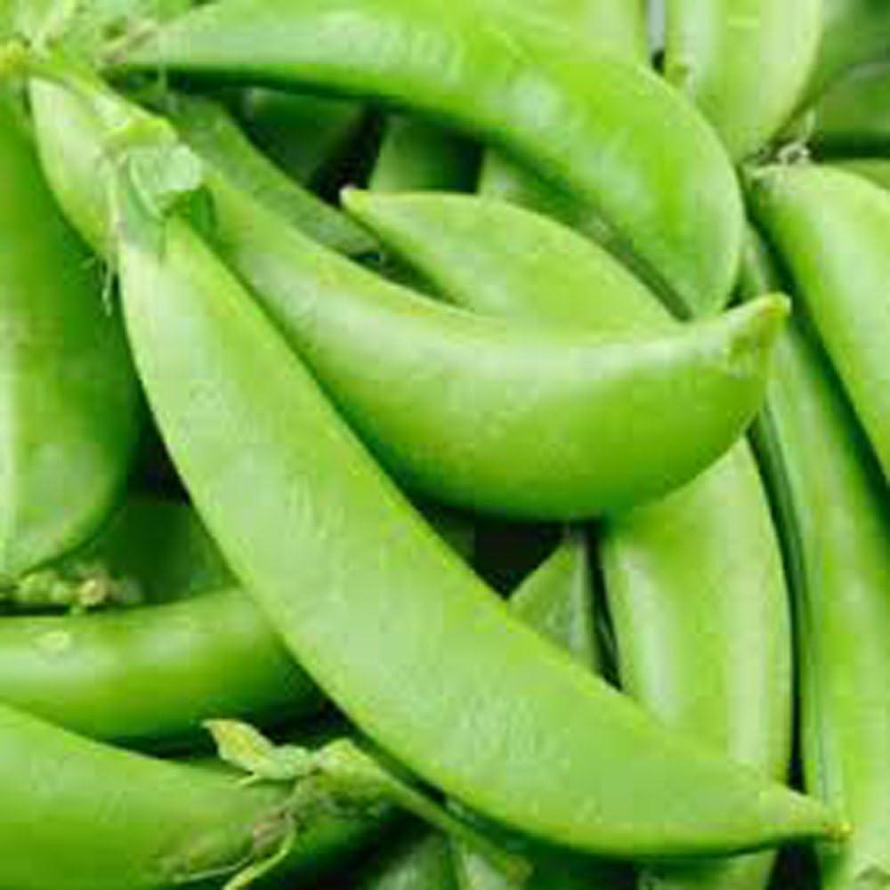 Amazon Com Peas Sugar Snap Pea Seed Organic Non Gmo 20