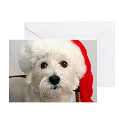 Amazon Cafepress Greeting Cards Santa Westie Greeting