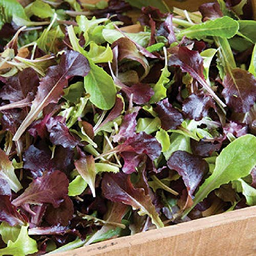 (David's Garden Seeds Lettuce Wildfire Lettuce Mix SL3583 (Multi) 500 Non-GMO, Open Pollinated Seeds)