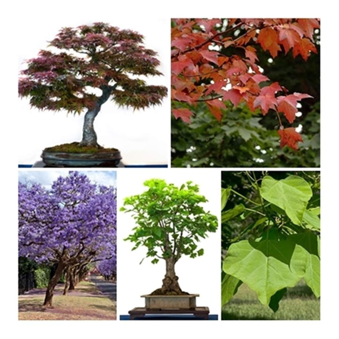 RP Seeds Bonsai Tree Seed Collection No 2-5 Packets. Save 30% on normal prices.