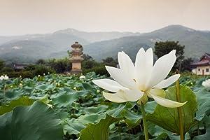 Close Up of Lotus Flower North Gyeongsang Province South Korea Photo Photograph Cool Wall Decor Art Print Poster 36x24